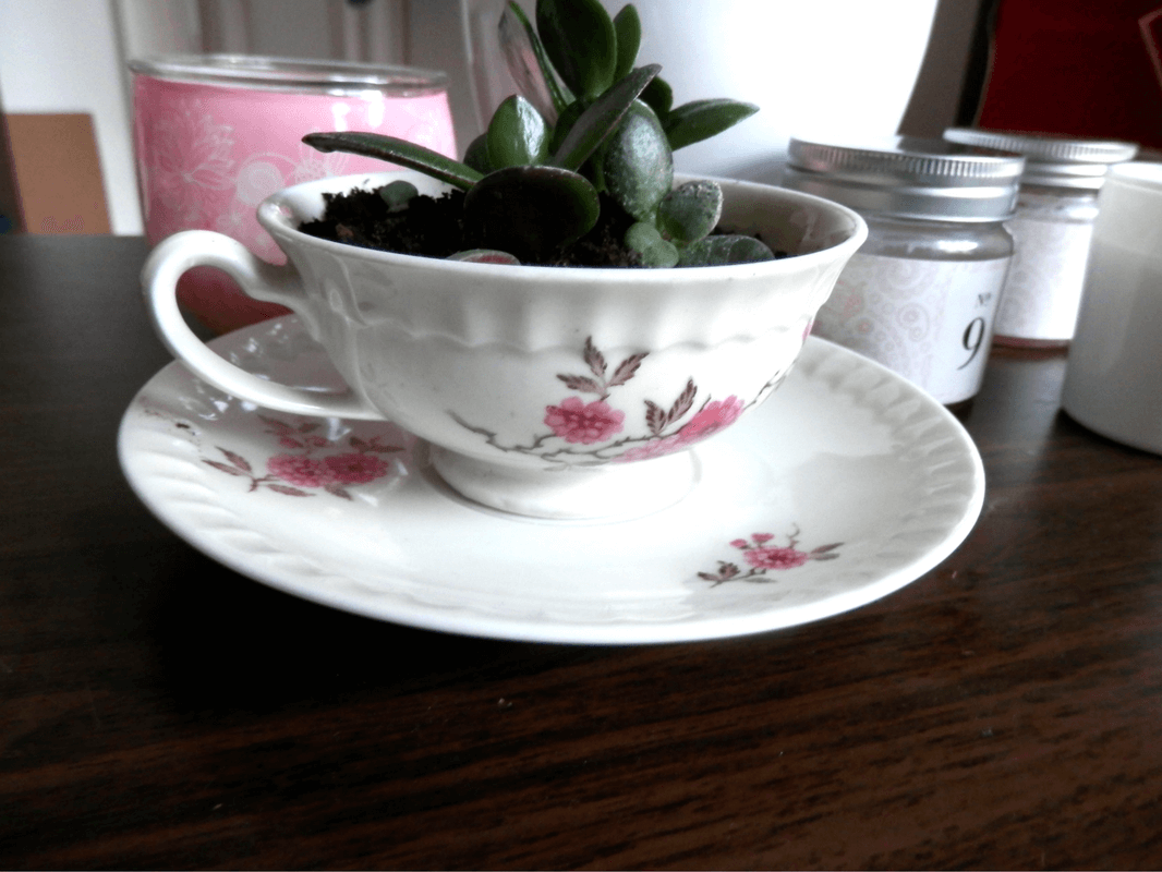 Geldbaum in der Teetasse – Pflanzen DIY