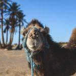 Marokko – Tipps von Bloggern
