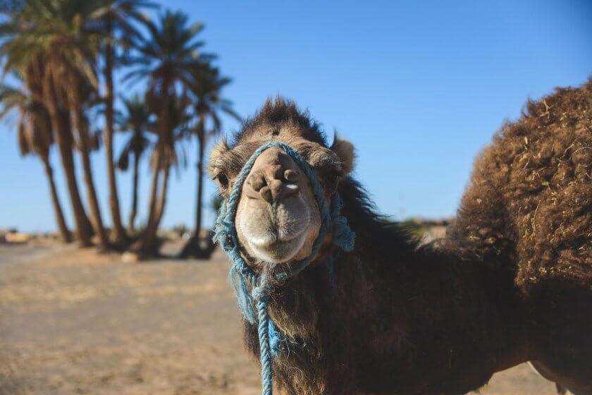 Marokko Tipps von Bloggern, was man gesehen haben muss