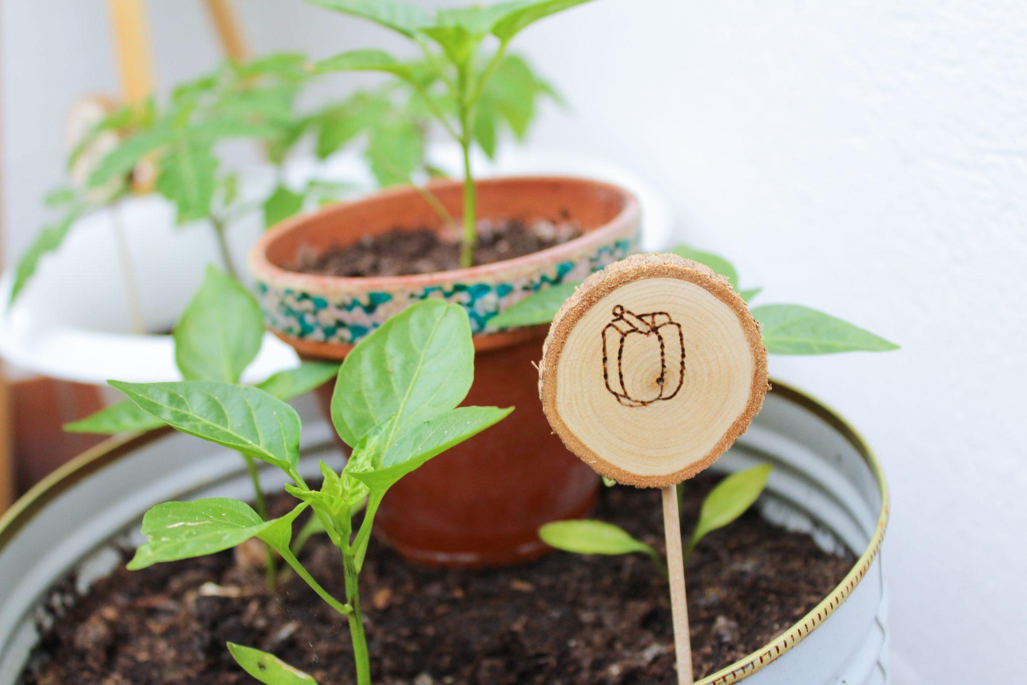 DIYs mit: Brandmalkolben Pflanzenschilder