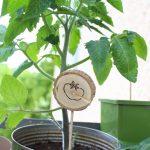 Pflanzenschilder für Balkon und Garten mit dem Brandmalerei Lötkolben bei DIYs mit