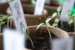 DIY Pflanzenschilder zum sleber machen