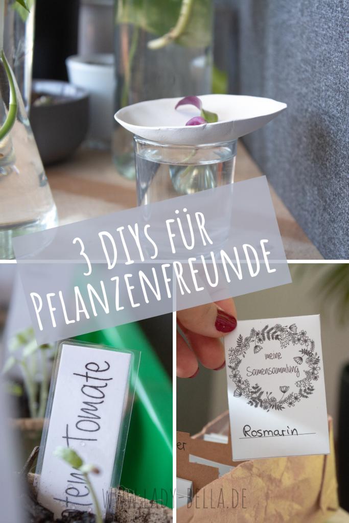 3 DIYs für Pflanzenfreunde