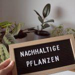 Nachhaltige Pflanzen – einfacher als gedacht