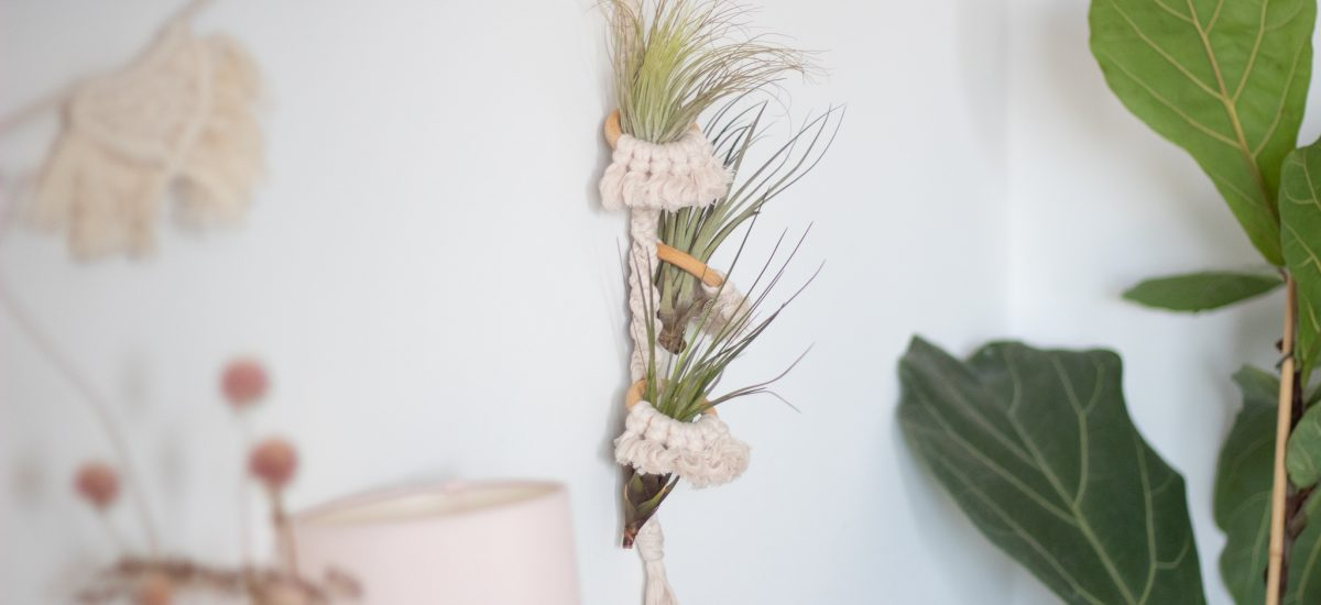 DIY Tillandsien-Hänger aus Makramee und Holz